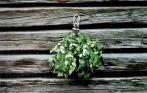 Sauna Birkenreisig - der Kultartikel aus Finnland